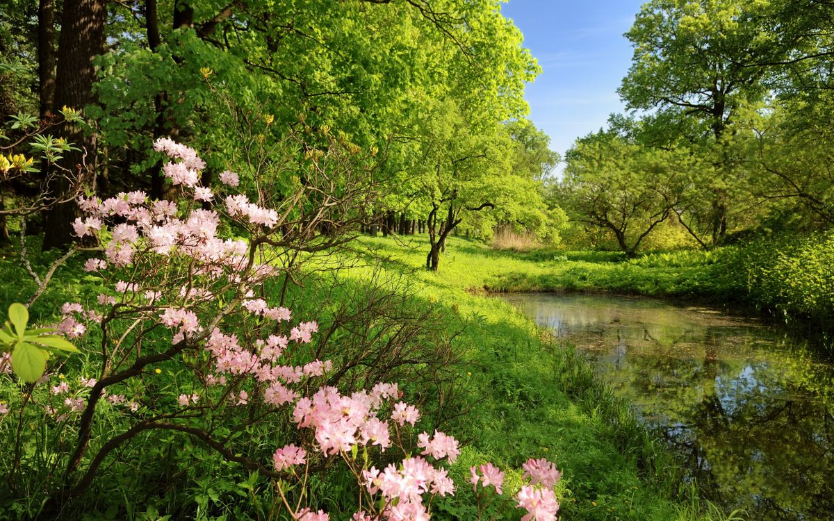 Фото бесплатно цветы, болото, деревья - на рабочий стол
