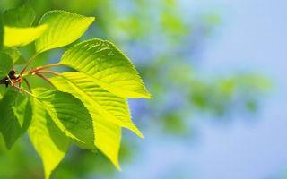 Фото бесплатно ветви, листья, зеленые, прожилки, природа
