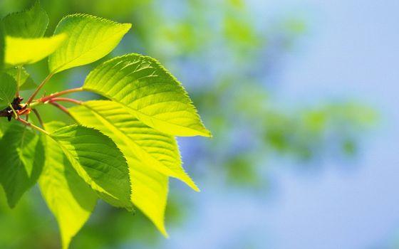 Фото бесплатно ветви, листья, зеленые