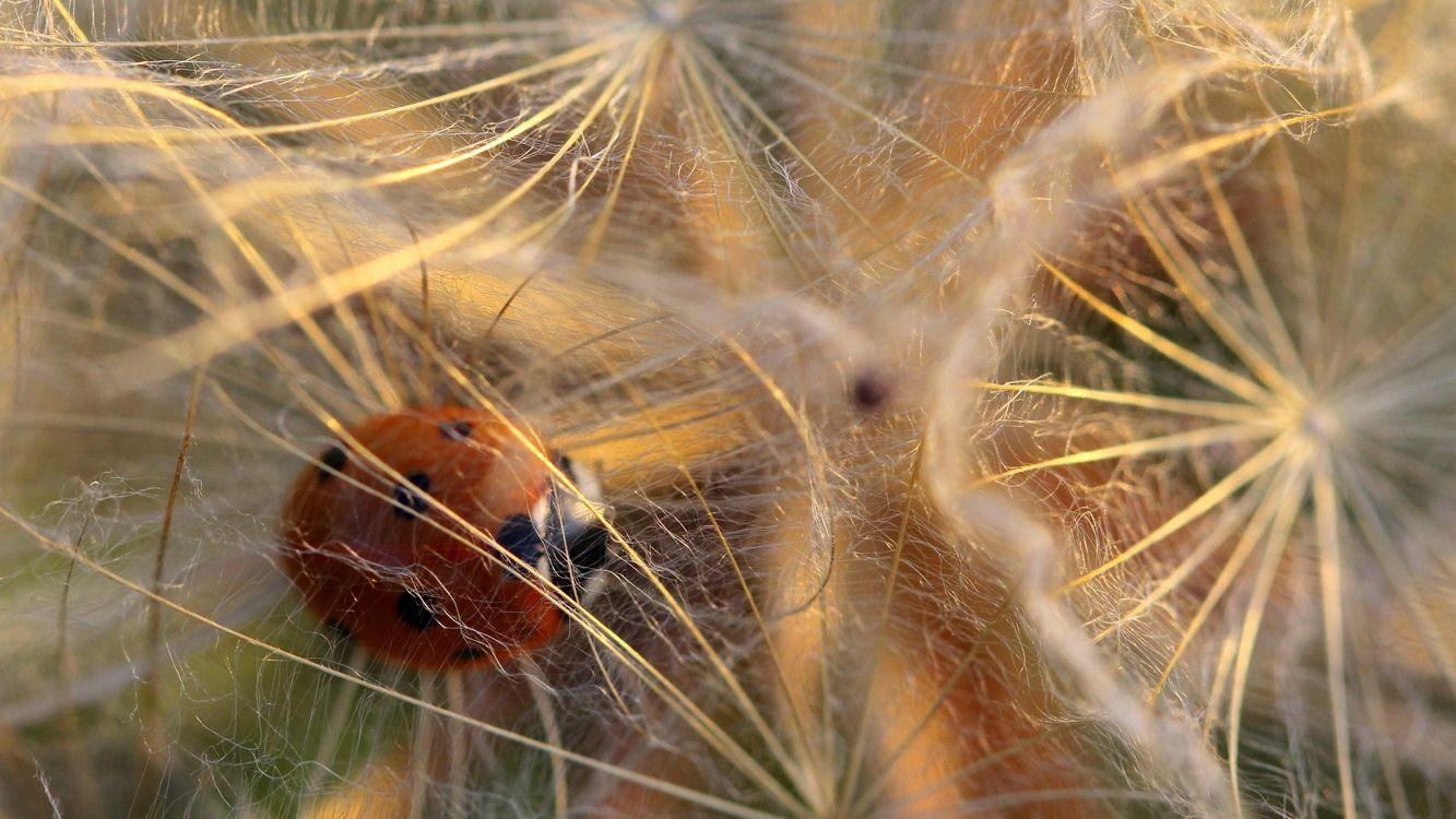 Фото бесплатно божья коровка, растения, насекомые