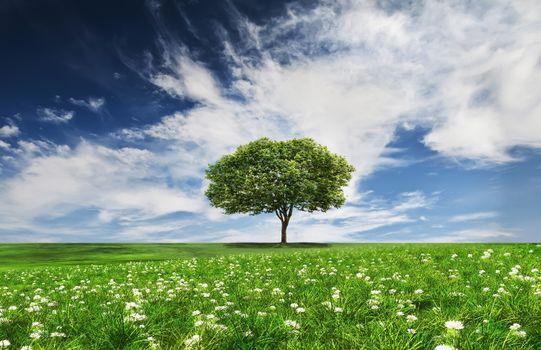 Beautiful wallpaper tree, field on the phone