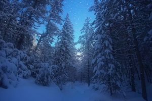 Photo free winter, forest, snow