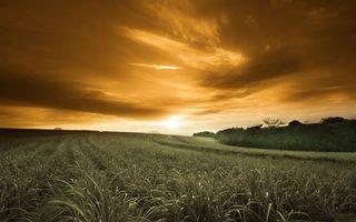 Фото бесплатно поле, кустарник, горизонт