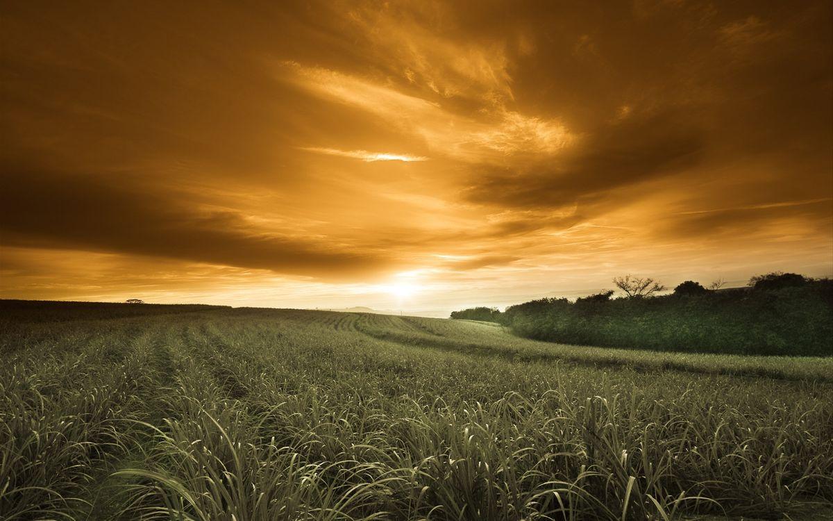 Фото бесплатно поле, кустарник, горизонт - на рабочий стол