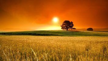 Бесплатные фото закат,солнце,оранжевое небо,поле,дерево,трава,пшеница