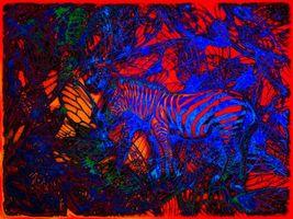 Фото бесплатно абстракция, фон, текстуры, текстура, зебра