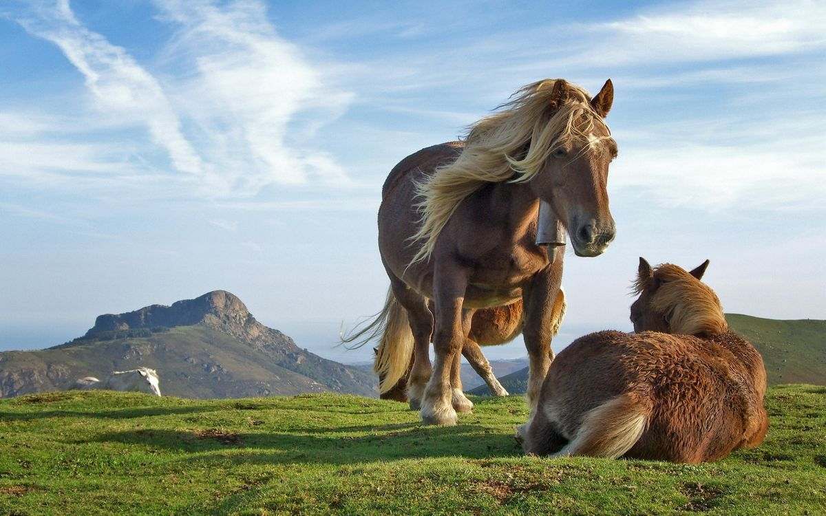 Free photo mountains, pasture, horse - to desktop