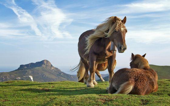 Фото бесплатно горы, пастбище, лошадь