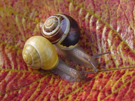 Photo free autumn leaf, snail, macro
