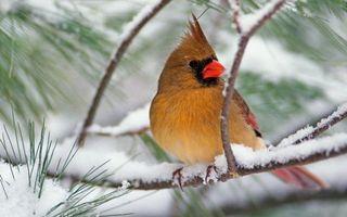 Бесплатные фото зима,дерево,ветви,снег,птица,перья,клюв