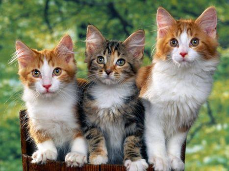 Заставки котята, пушистые, морды