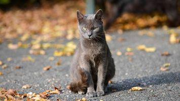 Бесплатные фото сердитый кот