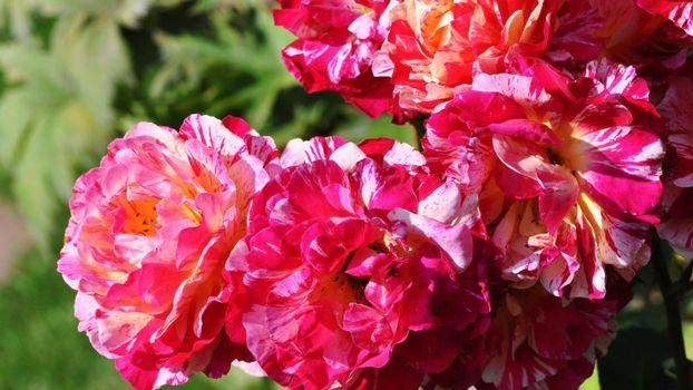 Фото бесплатно зеленый, цветы, листья