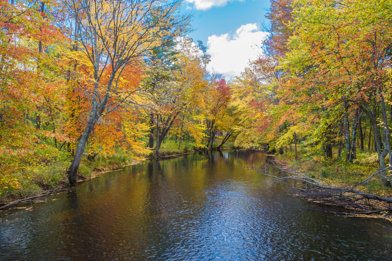 обои осень, река, лес деревья, пейзаж картинки фото