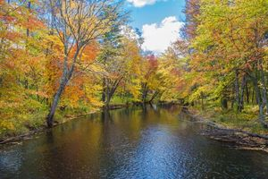 Photo free autumn, river, forest trees