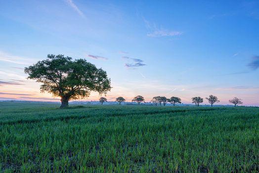 Бесплатные фото поле,деревья,рассвет,пейзаж
