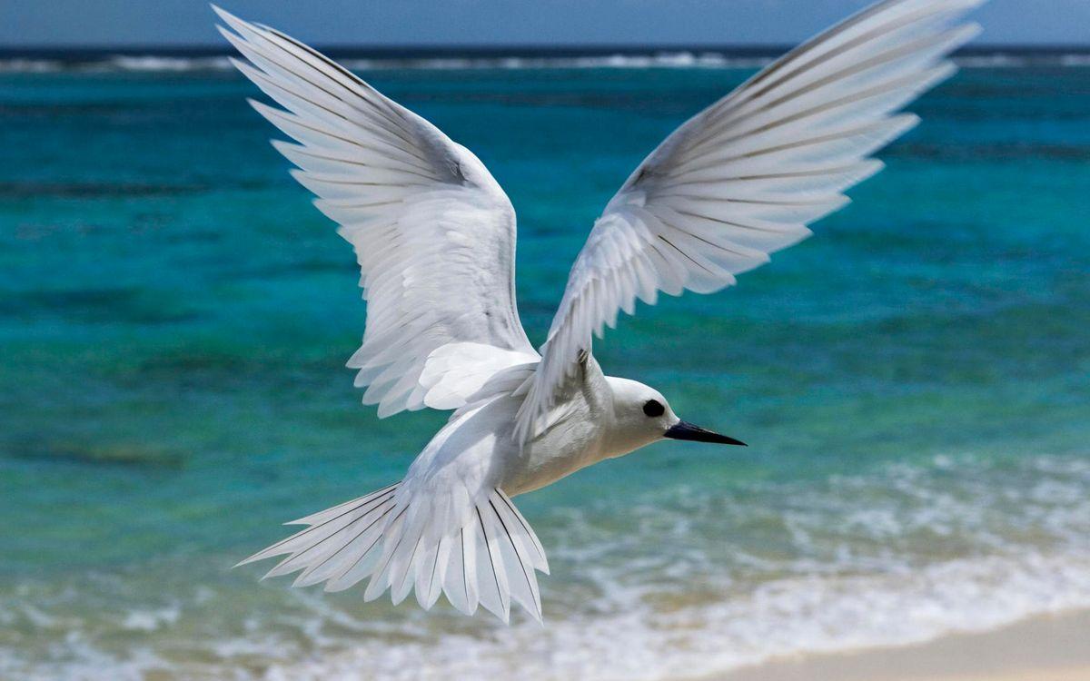 Фото бесплатно птичка, белая, полет - на рабочий стол