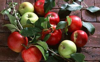 Бесплатные фото яблоки,фрукты,ветка,листья