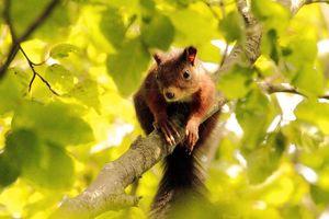 Бесплатные фото дерево,ветка,белка,животное,рыжая
