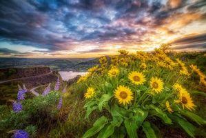 Бесплатные фото Орегон, Ущелье реки Колумбия, Ровена Крест, закат, горы, цветы, пейзаж