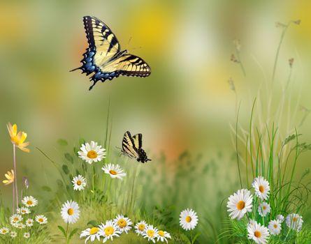 Фото бесплатно поле, цветы, бабочки