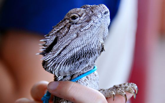 Photo free collar, dragon, arm