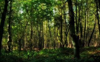 Photo free trunks, forest, leaves