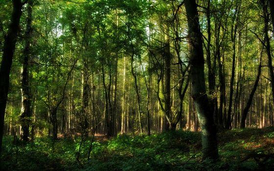 Фото бесплатно стволы, лес, листья