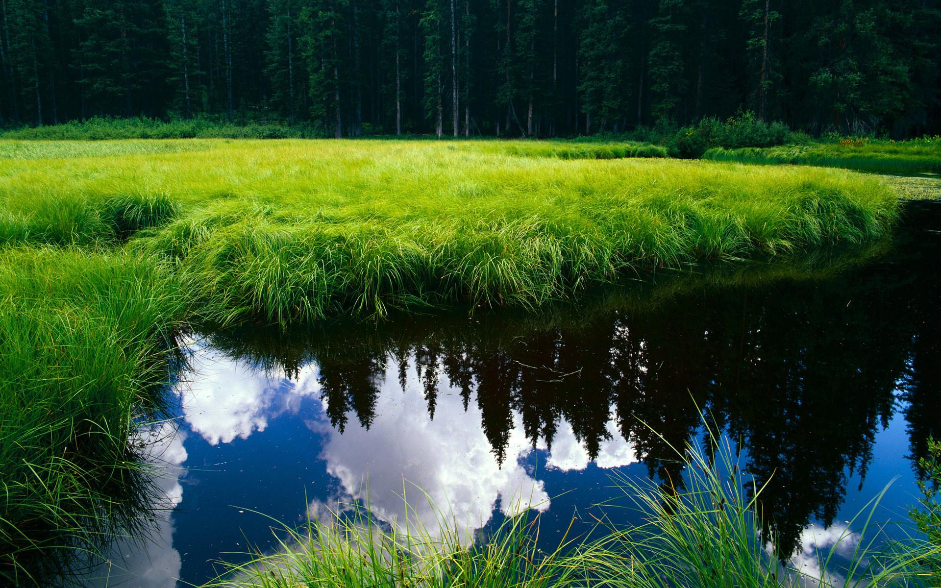 Берег озера в траве  № 2482626  скачать