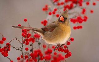 Бесплатные фото птичка,хвост,перья,хохолок,клюв,оранжевый,ветка