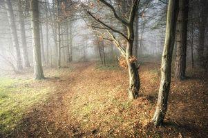 Бесплатные фото лес,осень,деревья,туман,тропинка,природа