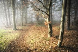 Фото бесплатно осень, тропа, туман