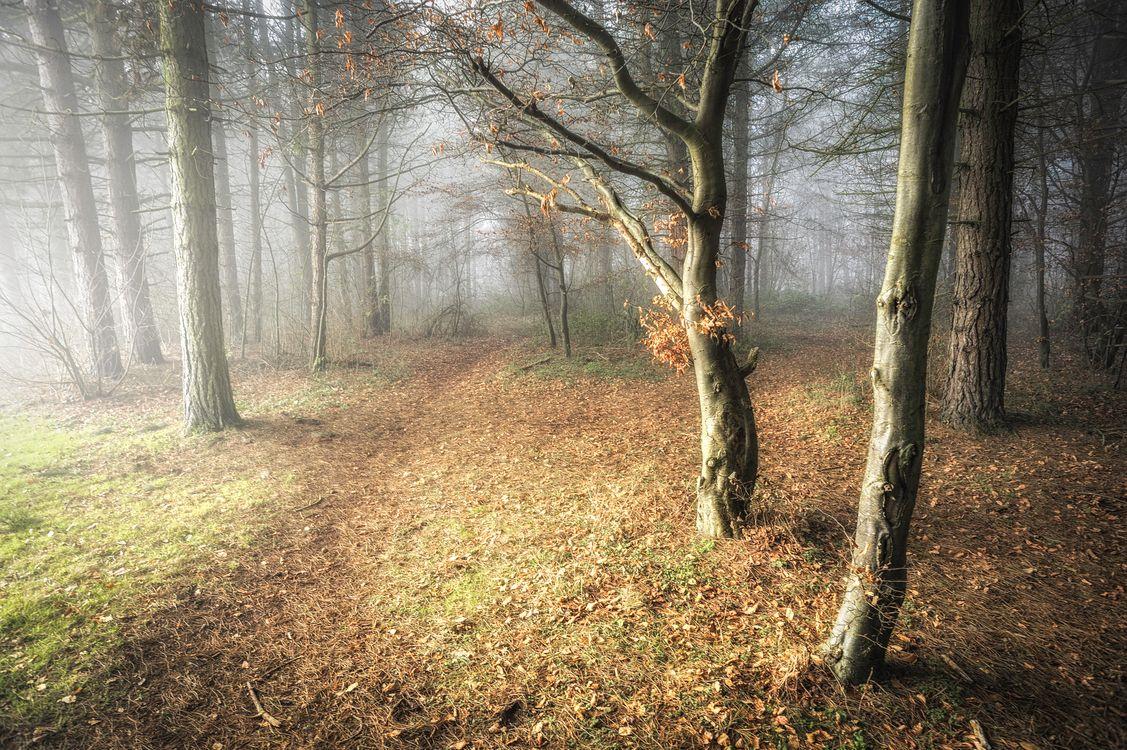 Фото бесплатно лес, осень, деревья, туман, тропинка, природа, природа - скачать на рабочий стол
