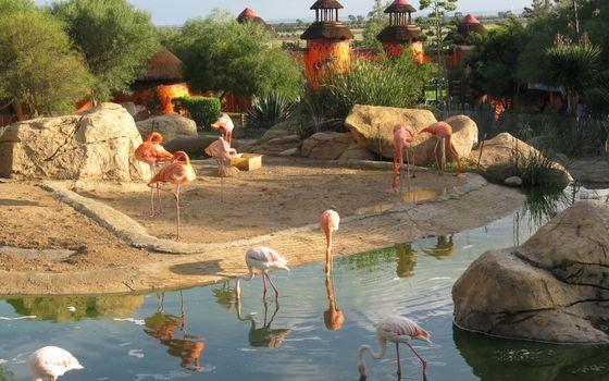 Заставки розовые фламинго, парк, водоем