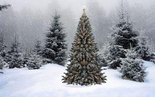 Фото бесплатно Ёлка в гирляндах, ёлка, снег, зима