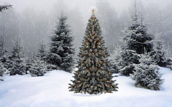 Фото бесплатно Ёлка в гирляндах, ёлка, снег