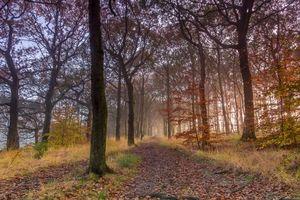Бесплатные фото осень,лес,деревья,дорога,парк,природа,пейзаж