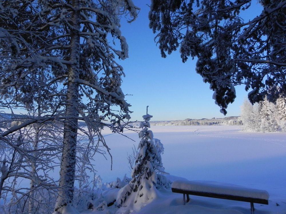 Фото бесплатно зима, снег, деревья, лавочка, пейзаж, пейзажи - скачать на рабочий стол
