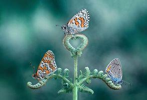Заставки цветок, бабочка, макро
