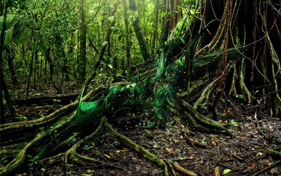 Бесплатные фото джунгли,кустарник,дерево,лианы,корни,листья