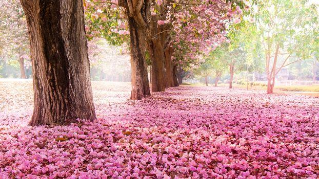 Бесплатные фото парк,деревья,стволы,цветы,листва,тропинка