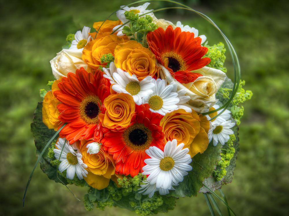 Фото бесплатно герберы, хризантемы, розы - на рабочий стол