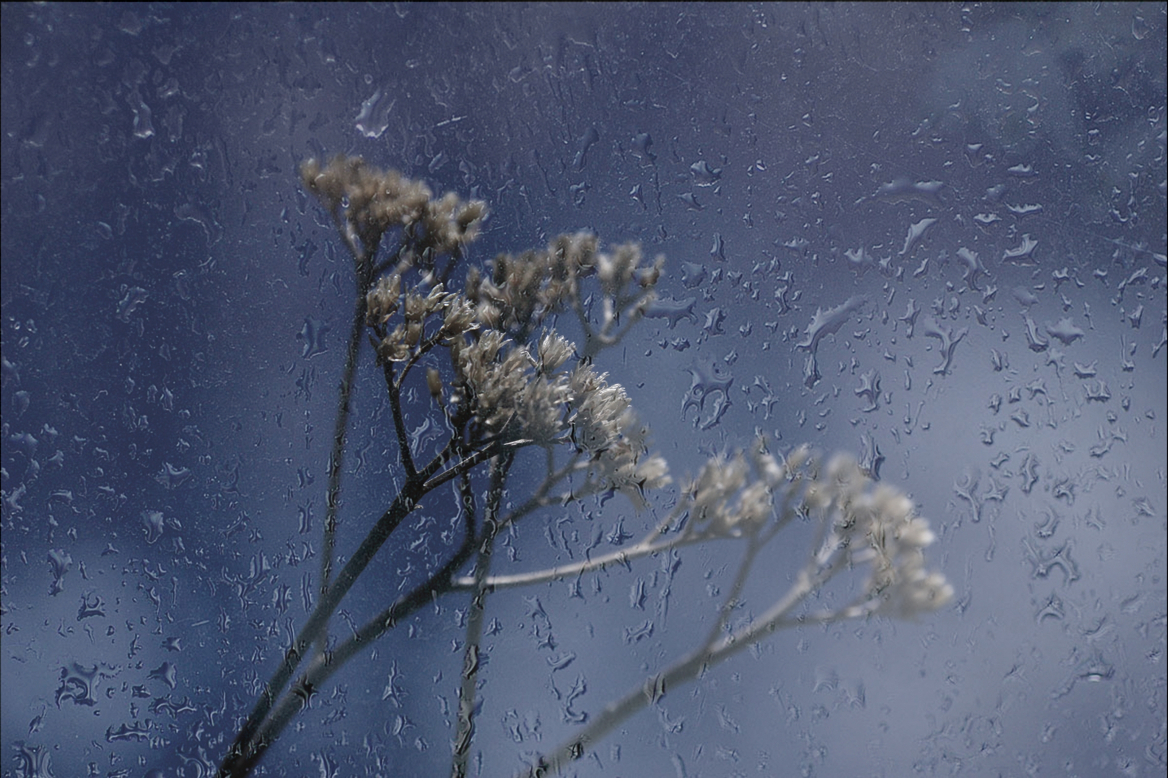 обои мокрое стекло, капли на стекле, растение за стеклом, макро картинки фото