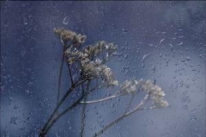 Фото бесплатно мокрое стекло, капли на стекле, растение за стеклом