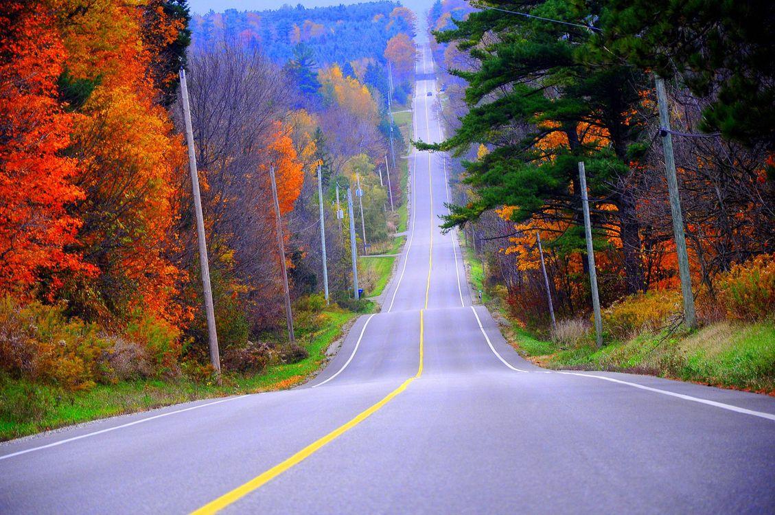 Фото бесплатно осенняя дорога, лес, трасса, асфальт, деревья, столбы, природа - скачать на рабочий стол