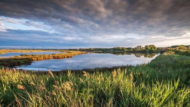 Фото бесплатно река, кустарник, берег