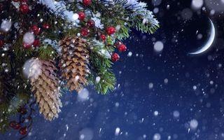 Фото бесплатно Еловые шишки и ягоды, луна, снег