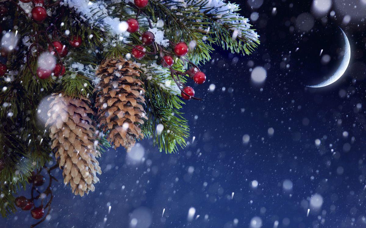 Фото бесплатно Еловые шишки и ягоды, луна, снег - на рабочий стол