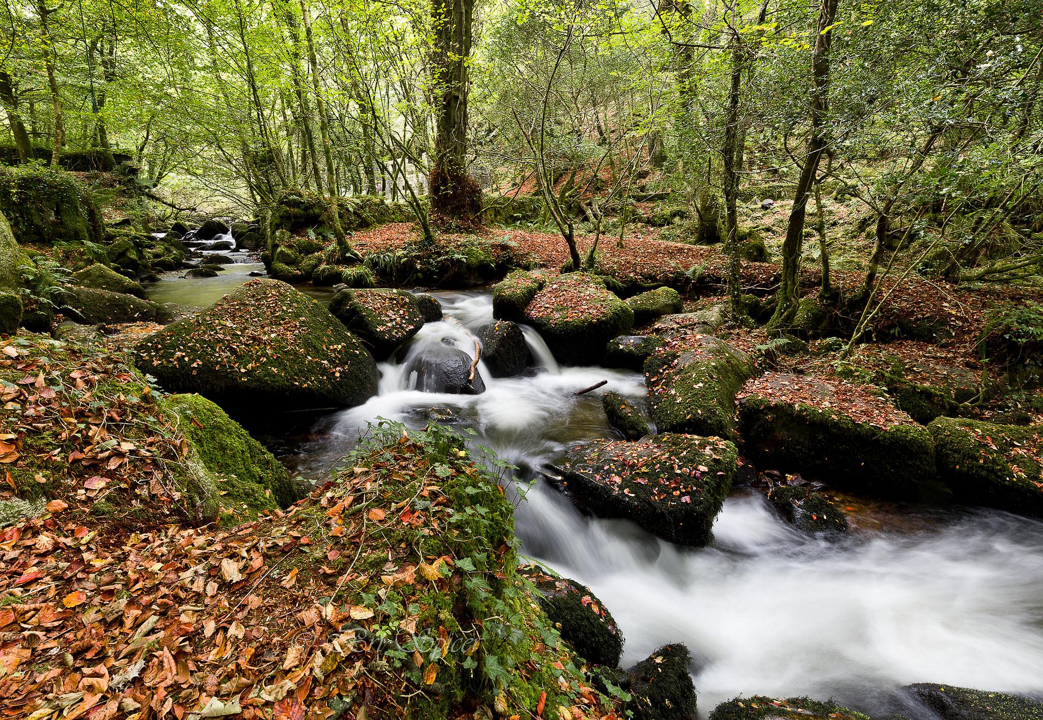обои осень, лес, деревья, река картинки фото