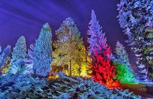 Бесплатные фото разноцветные елки,подсветка,лес,зима,снег